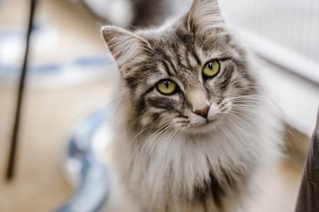 دیدن گربه در خواب , دیدن گربه هار در خواب , دیدن حمله گربه در خواب