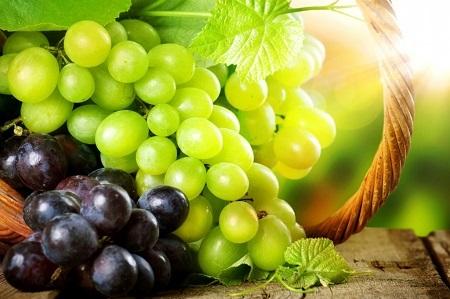 خواص کامل انگور , فواید انگور, خواص دارویی انگور, انواع انگور , خواص آب انگور , خواص انگور قرمز , عکس انگور , انگور سیاه , خواص انگور